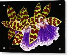 Acrylic Print featuring the painting Orchids - Jumping Jacks With Black Background by Kerri Ligatich