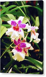 Acrylic Print featuring the painting Orchids 1 by Sandy MacGowan