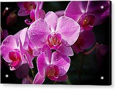 Orchids 4 Acrylic Print by Karen McKenzie McAdoo