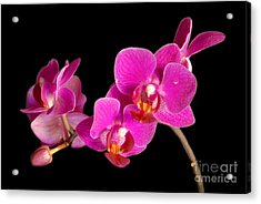 Acrylic Print featuring the photograph Orchids by Alana Ranney
