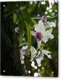 Orchids Acrylic Print by Deborah Molitoris
