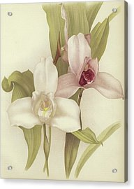 Orchids Acrylic Print by English School