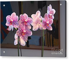 Acrylic Print featuring the photograph Orchids by Erik Falkensteen