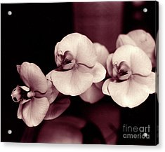 Acrylic Print featuring the photograph Orchids Hawaii by Mukta Gupta