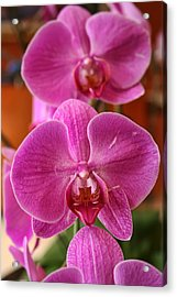 Orchids In Bloom Acrylic Print by Alexander Mendoza