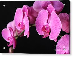 Orchids In Bloom Acrylic Print by Angie Bechanan