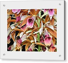 Orchids In Bloom Acrylic Print by Mindy Newman
