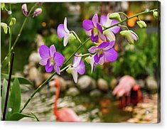 Orchids In Paradise Acrylic Print