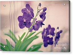 Acrylic Print featuring the photograph Orchids In Purple  by Ana V Ramirez