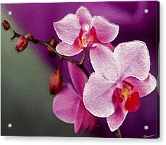 Orchids In Violets Acrylic Print