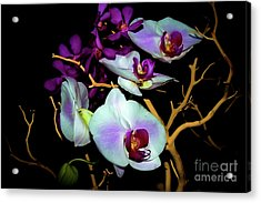 Acrylic Print featuring the photograph Orchids In Water Color by Diana Mary Sharpton