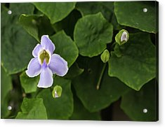 Acrylic Print featuring the photograph Orchids  by Jingjits Photography