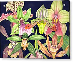 Orchids  Acrylic Print by Lucy Arnold
