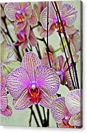 Orchids Acrylic Print by Maria Arango