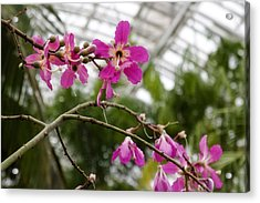Orchids Myriad Botanical Gardens Okc Acrylic Print by Toni Hopper