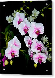 Orchids On Black Acrylic Print
