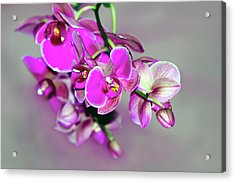 Acrylic Print featuring the photograph Orchids On Gray by Ann Bridges