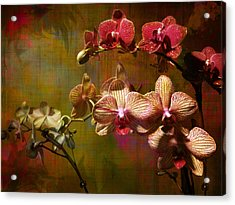 Orchids On Silk Acrylic Print