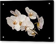 Orchids Acrylic Print by Pat Carosone