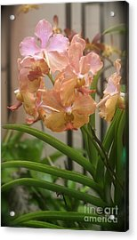 Acrylic Print featuring the photograph Orchids Peach by The Art of Alice Terrill