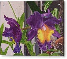 Orchids Acrylic Print by Robert Silvera