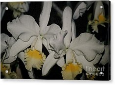 Acrylic Print featuring the photograph Orchids Satin by The Art of Alice Terrill