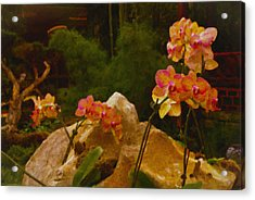 Orchids Acrylic Print by Stephen Campbell
