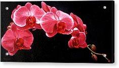 Orchids Acrylic Print by Takayuki Harada