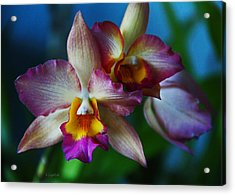Acrylic Print featuring the photograph Orchids - Trio by Kerri Ligatich
