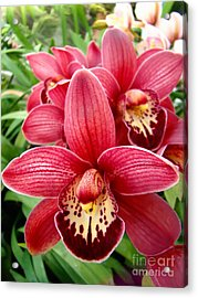 Orchids Up Close Acrylic Print