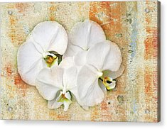 Orchids Upon The Rough Acrylic Print by Andee Design