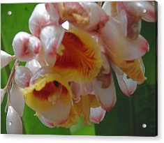 Orchids Acrylic Print by Ursula Wright