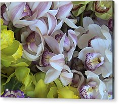 Orchids Acrylic Print by William Thomas