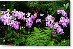 Orchids With Fern-panoramic Acrylic Print by Margie Avellino