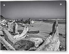 Oregon Beach Driftwood Acrylic Print