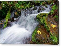 Oregon Cascade Acrylic Print by Jonathan Davison