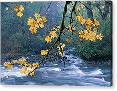 Oregon, Cascade Mountain Acrylic Print