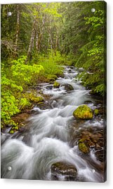 Oregon Creek Acrylic Print