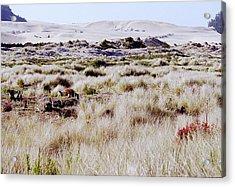 Oregon Dunes 6 Acrylic Print by Eike Kistenmacher