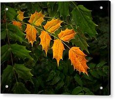 Oregon Grape Autumn Acrylic Print