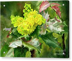 Oregon Grape Blossoms With Leaves Acrylic Print by Sharon Freeman