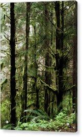 Oregon Old Growth Coastal Forest Acrylic Print
