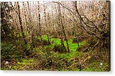 Oregon Rainforest Acrylic Print