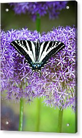 Acrylic Print featuring the photograph Oregon Swallowtail by Bonnie Bruno