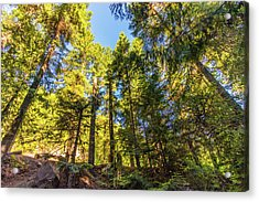 Acrylic Print featuring the photograph Oregon Trees by Jonny D