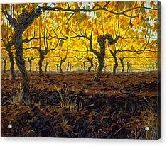 Oregon Vineyard Golden Vines Acrylic Print by Michael Orwick