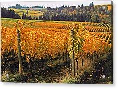 Oregon Wine Country Acrylic Print