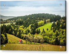 Oregon Wine Country Acrylic Print by TK Goforth
