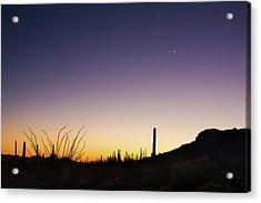 Organ Pipe Cactus National Monument Sunset Acrylic Print by Steve Gadomski