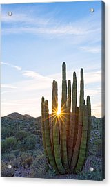 Acrylic Print featuring the photograph Organ Pipe Cactus by Patricia Davidson
